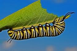 caterpillar-eating-image