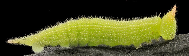 caterpillar-image