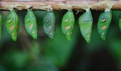 cocoons-green-image